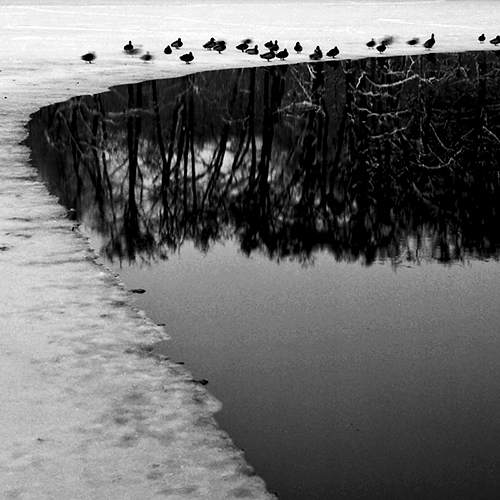 Damir Matijevic Photography - Ducks on the Lake
